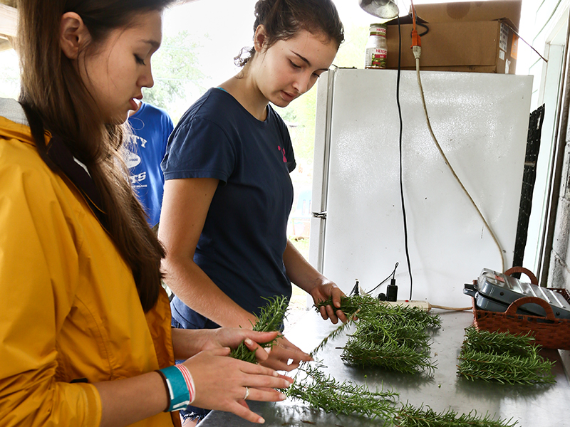 Tulane public service interns bundling rosemary on an urban farm